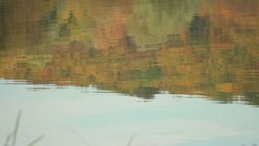 Reflection of Trees. Autumn forest reflected in the water stock video footage