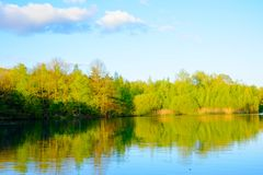 Forest reflected in a lake stock photography