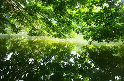 reflection of trees in calm lake Royalty Free Stock Image