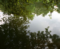 reflection of trees in calm lake Royalty Free Stock Photography