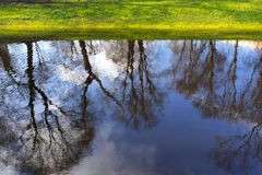 Reflection of trees in the city pond with green shore Stock Image