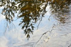 Reflection of trees in a frozen river. Water and thin ice. Autumn. Royalty Free Stock Images