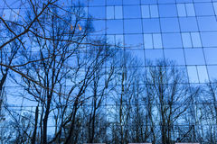 Reflection of trees in a glass wall. Stock Images