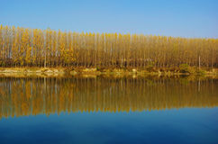 Reflection of trees (horizontal image). A horizontal shot of tree's Reflection in Shenyang, China.The water and sky merge in one colour Royalty Free Stock Image