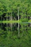 Reflection of trees in a lake. (Shiretoko in Hokkaido, Japan Stock Photos