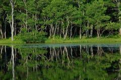 Reflection of trees in a lake. (Shiretoko in Hokkaido, Japan Royalty Free Stock Photo