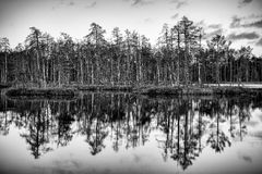 Reflection of trees. In the lake Royalty Free Stock Photos
