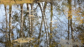 Reflection of trees on the lake in the fall. Yellow leaves on the water stock video footage