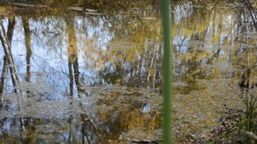Reflection of trees on the lake in the fall. Yellow leaves on the water stock footage