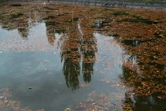 Reflection of trees in lake, with fallen leaves in it Royalty Free Stock Photos
