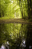 Reflection of trees in a lake from a forest Stock Images