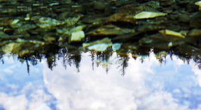 Reflection of trees in the lake Gruner see Austria Royalty Free Stock Photos