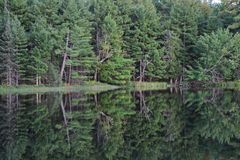 Reflection of Trees in a Lake Royalty Free Stock Images