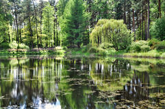 Reflection of trees in the lake. In spring park royalty free stock photo