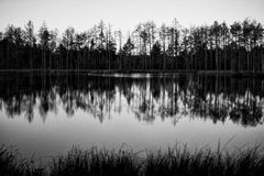 Reflection of trees. In lake water Stock Photos