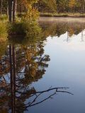 Reflection of trees on a marsh lake Royalty Free Stock Photo