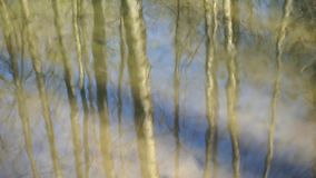 Reflection of trees mirrored on rippled water surface stock footage