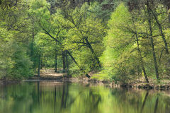Reflection of trees in the pond Stock Images