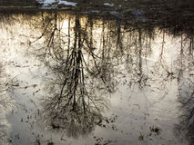 Reflection. Of trees in a pond by my house Royalty Free Stock Image