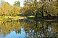 Reflection of trees in a pond Stock Image