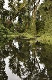 Reflection of trees in puddle Stock Photography
