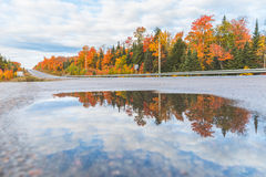 Reflection of trees in a puddle by a highway Stock Images