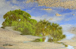 Reflection of Trees in Puddle. The reflection of tree tops and blue sky in a puddle on the asphalt Royalty Free Stock Photos
