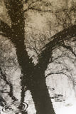 Reflection of trees in a rain puddle Royalty Free Stock Photos