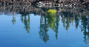 Reflection of trees on rippling blue water Royalty Free Stock Images