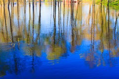 Reflection of trees in the river at dawn Royalty Free Stock Photo
