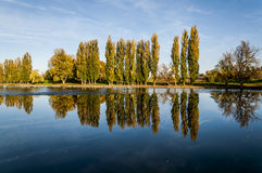 Reflection of trees. In the river Korana in Karlovac. Trees are mostly poplars and willows Stock Images