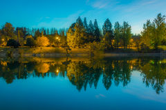 Reflection of trees shape like a wave. Parque General San Martin in Mendoza Argentina Stock Photography