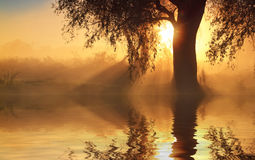 Reflection of trees on the shore at sunrise rays Royalty Free Stock Photography