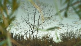 A reflection of trees and sky on small woodsy river. Autumn stock footage