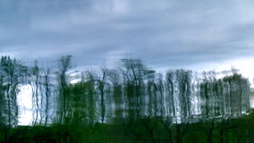 Reflection of Trees 1 stock video