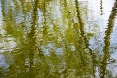 Reflection of trees Royalty Free Stock Photo