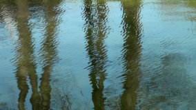 Reflection of trees in the water.  stock footage