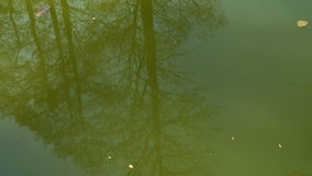 Reflection of trees in the water.  stock video footage