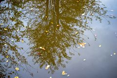 Reflection of trees in the water. Royalty Free Stock Photos