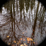 Reflection of trees in water in autumn Royalty Free Stock Photo
