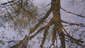 Reflection of trees in water. Background shoot in the spring of the static camera. Reflection of trees in water. Wave and drops into a puddle, natural phenomena stock video footage