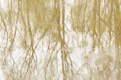 Reflection of trees in water. Royalty Free Stock Photos