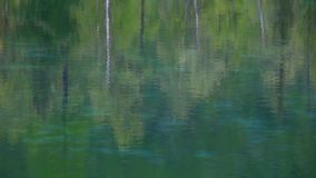 Reflection of trees in water. The reflection of a forest of trees in green water fall stock video footage