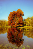 Reflection Of Trees In Water. Reflection Of Trees In Lake Stock Photography