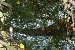 Reflection of trees in the water. Royalty Free Stock Images