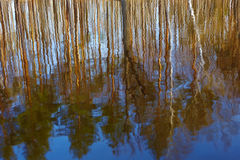 Reflection of trees on water. Reflections on blue water in a sunny day Stock Photography