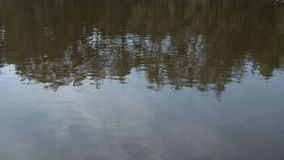 Reflection of Trees on Water Surface stock video footage