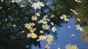 Reflection of trees in water. Yellow and orange leaves on the pond stock footage