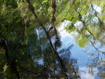 Reflection of trees in the waving surface of a pond Royalty Free Stock Image