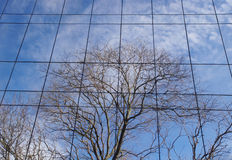 Reflection of trees in winter on a glass wall Royalty Free Stock Images